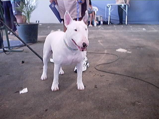 Hundeaustellung Fuerte Oktober 2001 (37)