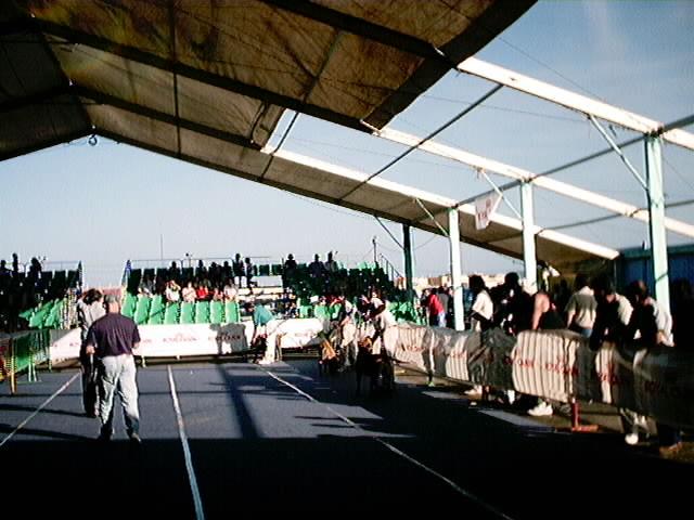 Hundeaustellung Fuerte Oktober 2001 (61)