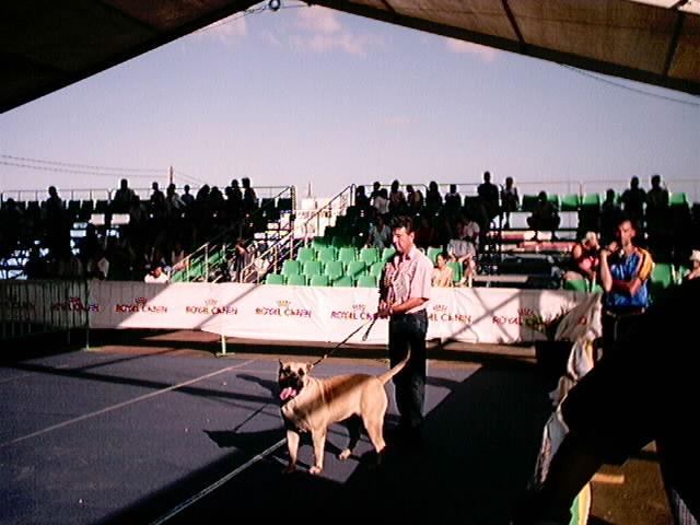 Hundeaustellung Fuerte Oktober 2001 (47)