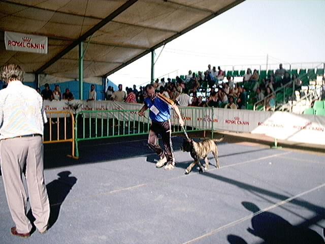 Hundeaustellung Fuerte Oktober 2001 (31)
