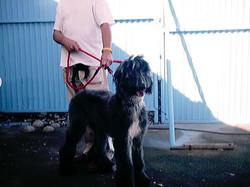 Hundeaustellung Fuerte Oktober 2001 (18)