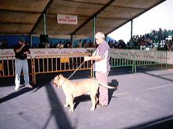 Hundeaustellung Fuerte Oktober 2001 (43)