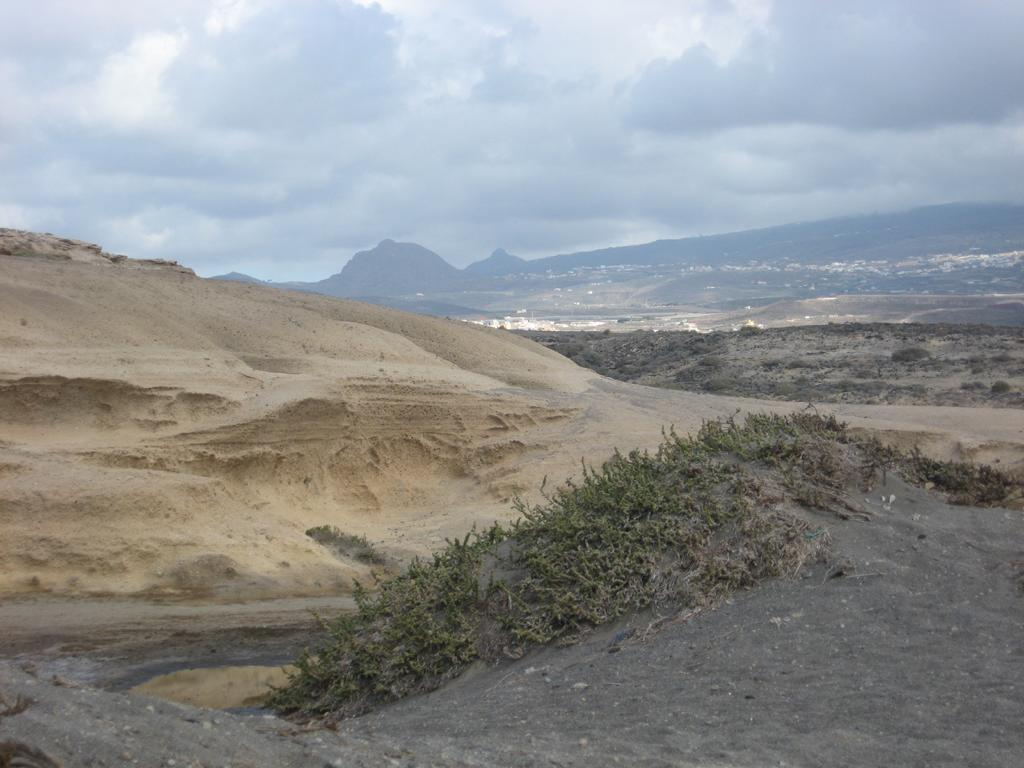 Tenerife Mai 2008 (114).JPG