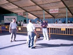 Hundeaustellung Fuerte Oktober 2001 (40)