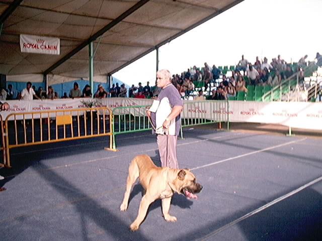 Hundeaustellung Fuerte Oktober 2001 (44)