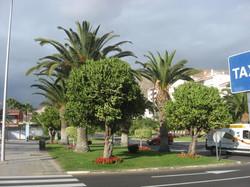 Tenerife Mai 2008 (49).JPG