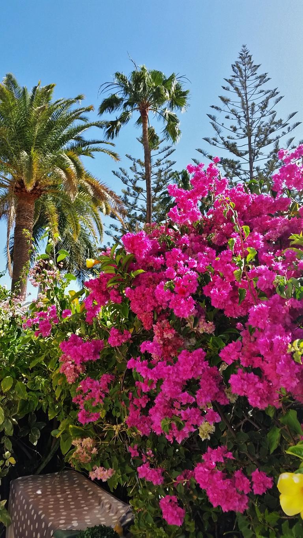 Gran Canaria Mai 2015 (86).JPG