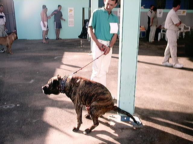 Hundeaustellung Fuerte Oktober 2001 (56)