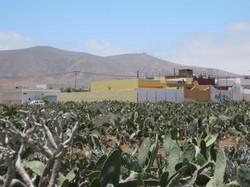 Fuerteventura Mai2009 (79).JPG