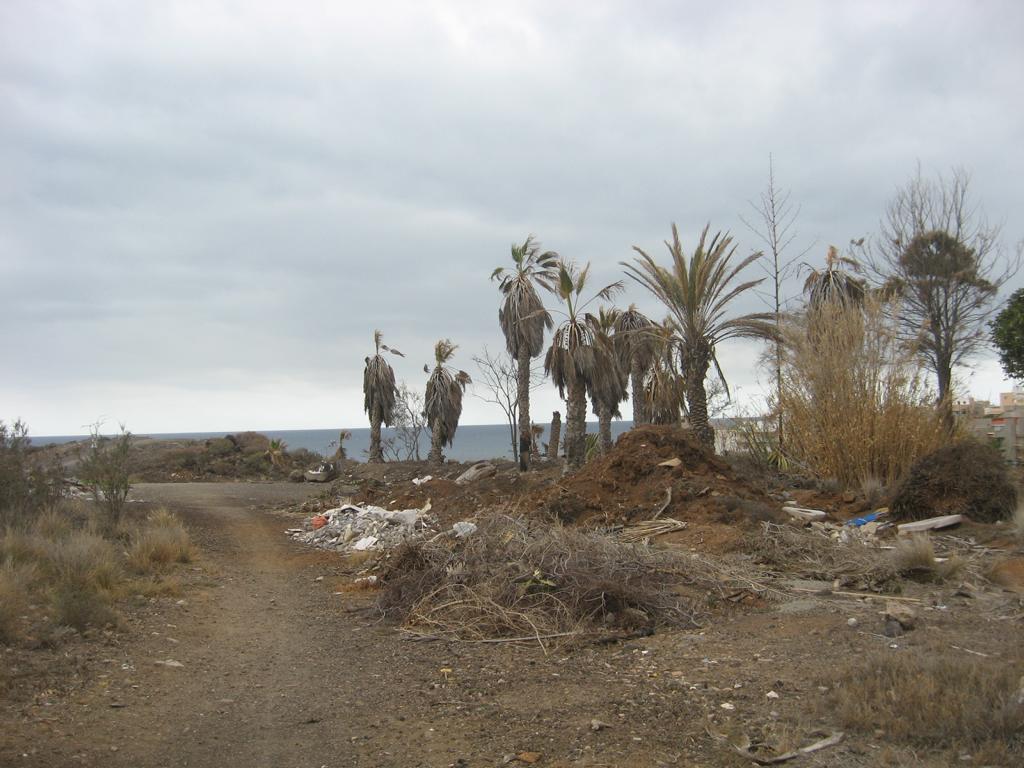 Tenerife Mai 2008 (94).JPG