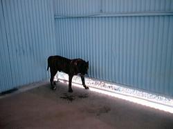 Hundeaustellung Fuerte Oktober 2001 (7)