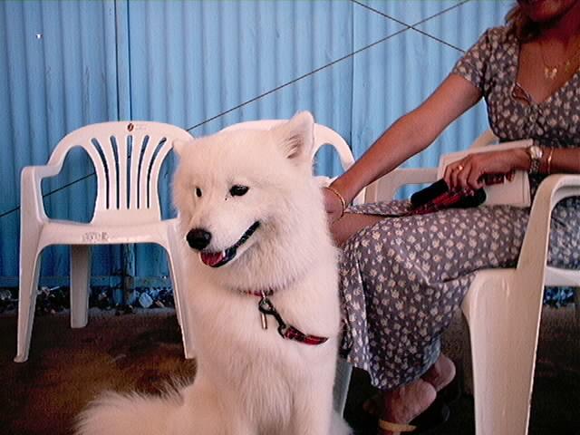 Hundeaustellung Fuerte Oktober 2001 (17)