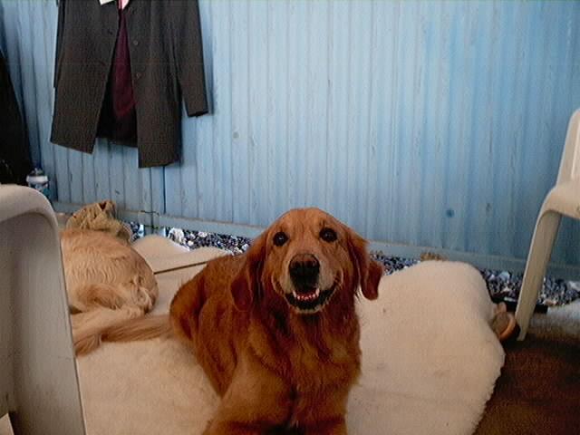 Hundeaustellung Fuerte Oktober 2001 (32)