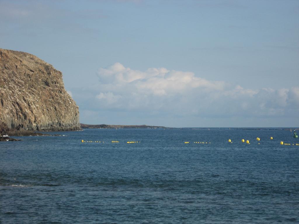 Tenerife Mai 2008 (64).JPG