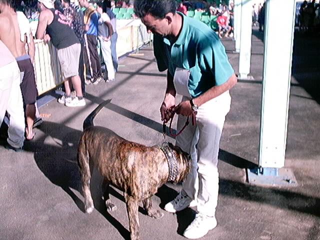 Hundeaustellung Fuerte Oktober 2001 (54)