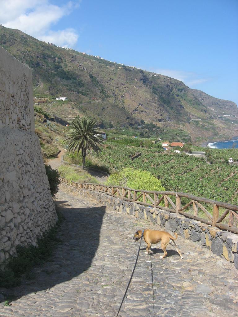 Tenerife Mai 2008 (247).JPG