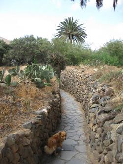Fuerteventura Mai2009 (96).JPG