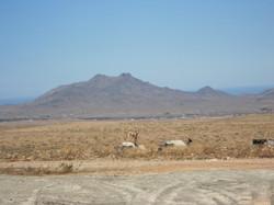 Fuerteventura Juni 2011 (63).JPG