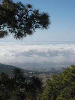 Tenerife Mai 2008 (399).JPG
