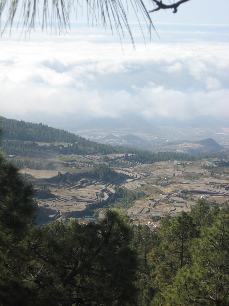 Tenerife Mai 2008 (405).JPG