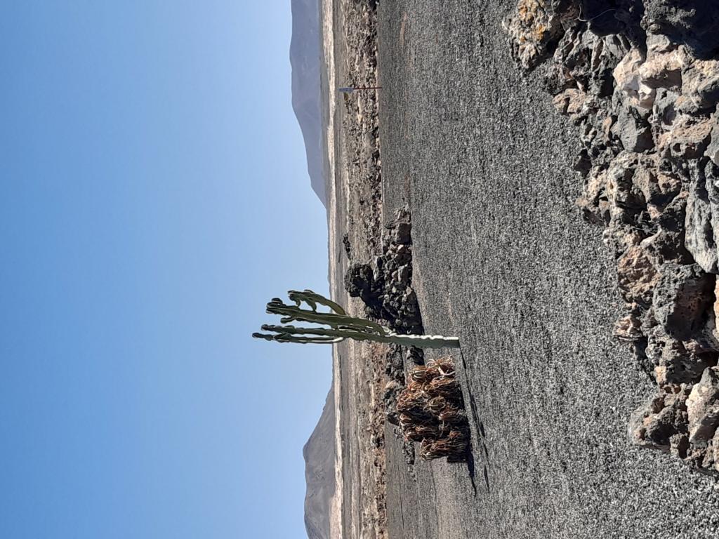Fuerteventura Febr 2020 web (106)