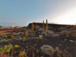 Fuerteventura Febr 2020 web (25)