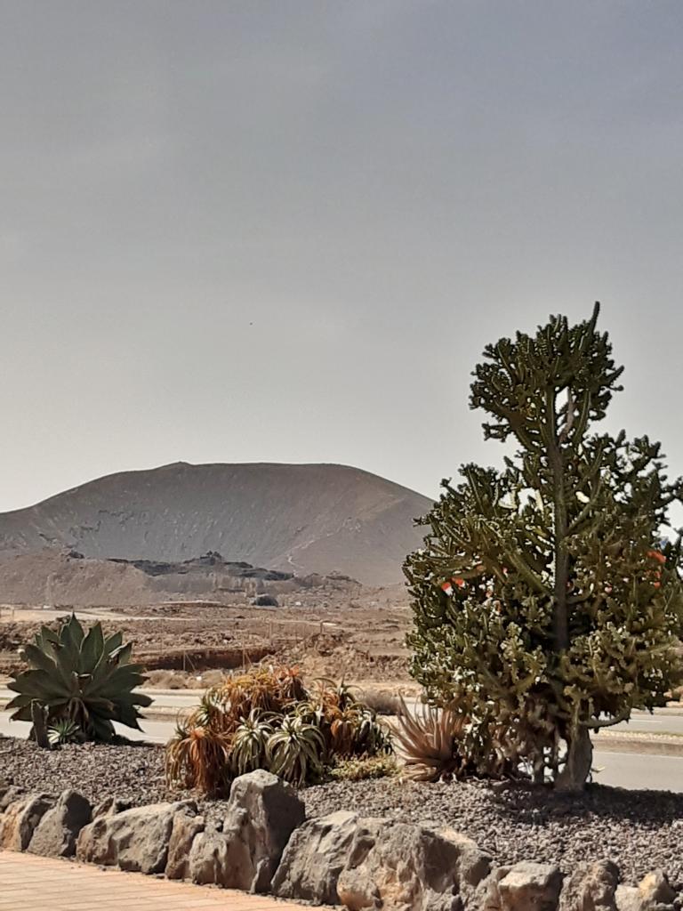 Fuerteventura Febr 2020 web (111)