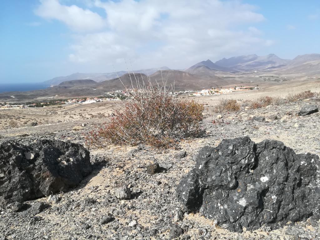 Fuerteventura 08 2018 (71)