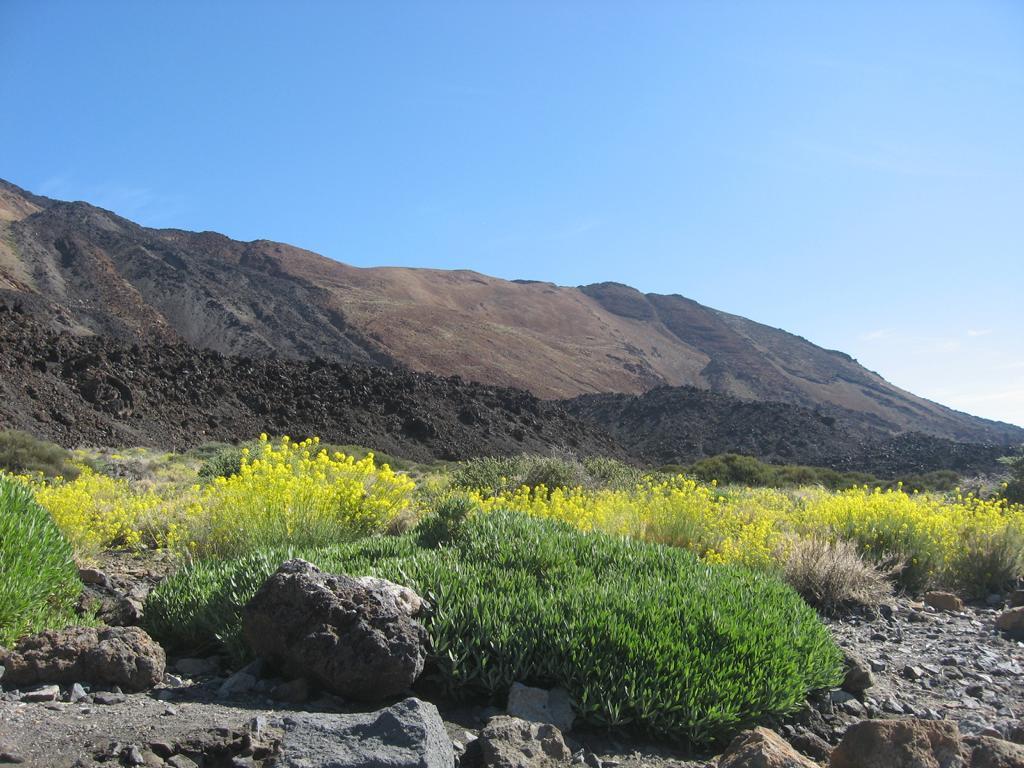 Tenerife Mai 2008 (480).JPG