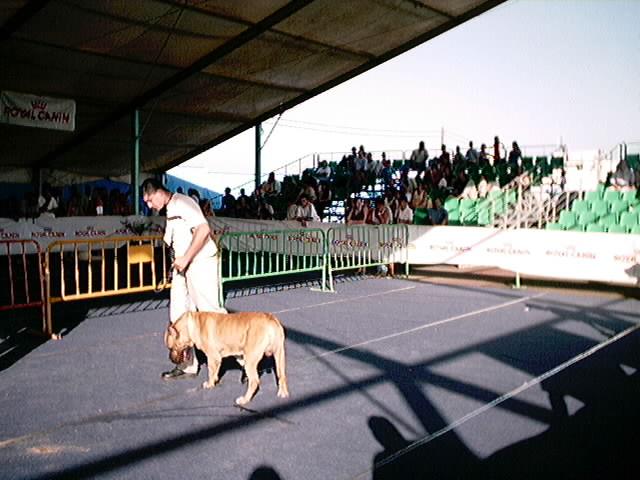 Hundeaustellung Fuerte Oktober 2001 (62)