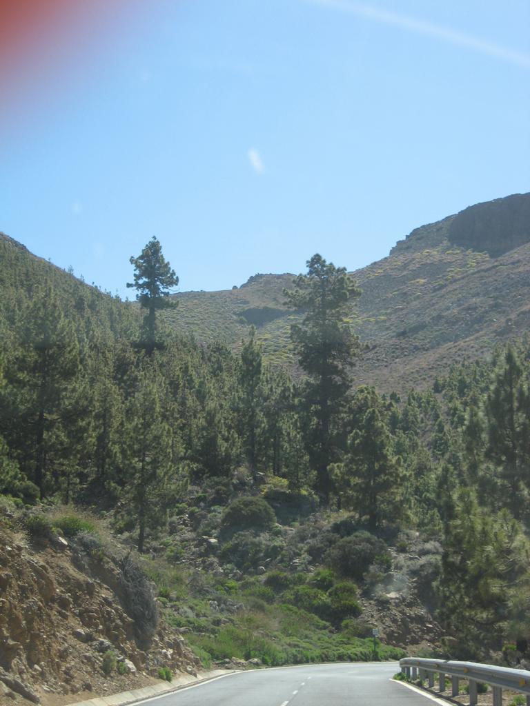 Tenerife Mai 2008 (545).JPG