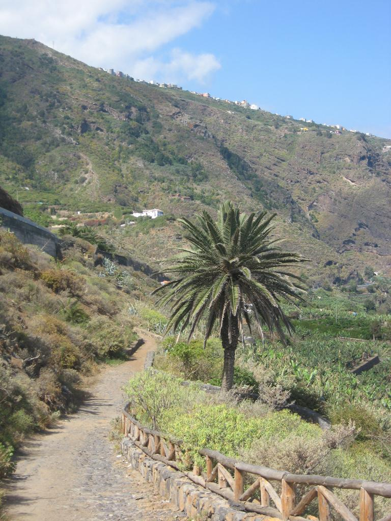 Tenerife Mai 2008 (251).JPG