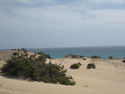 Fuerteventura Mai2009 (62).JPG