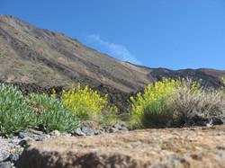 Tenerife Mai 2008 (515).JPG