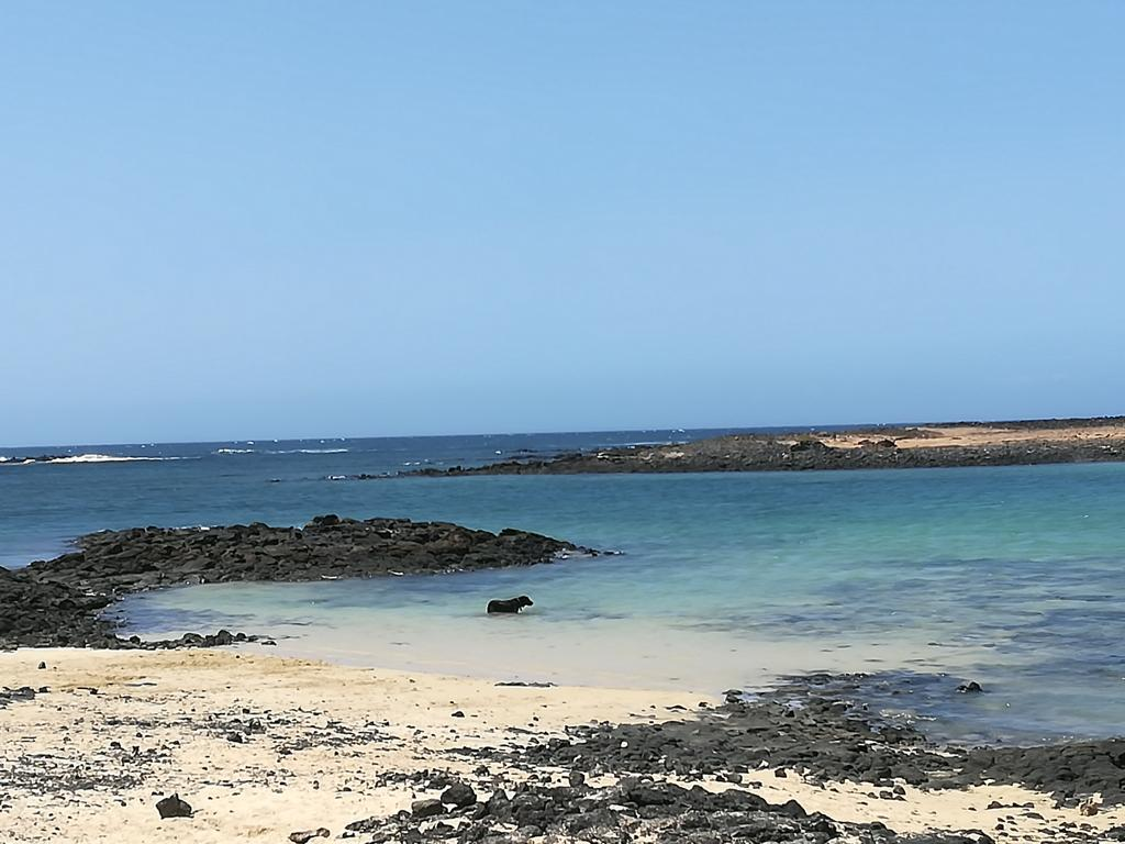 Fuerteventura 08 2018 (41)