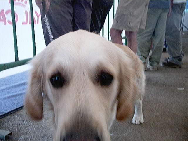 Hundeaustellung Fuerte Oktober 2001 (36)