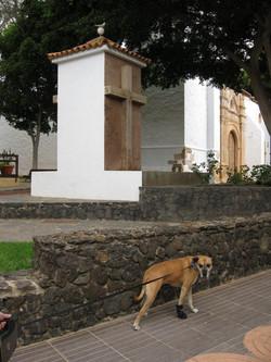 Fuerteventura Mai2009 (26).JPG