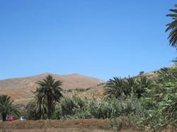 Fuerteventura Juni 2011 (54).JPG