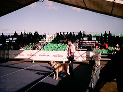 Hundeaustellung Fuerte Oktober 2001 (46)