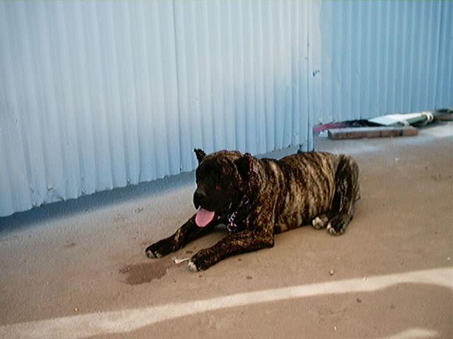 Hundeaustellung Fuerte Oktober 2001 (6)