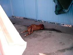 Hundeaustellung Fuerte Oktober 2001 (4)