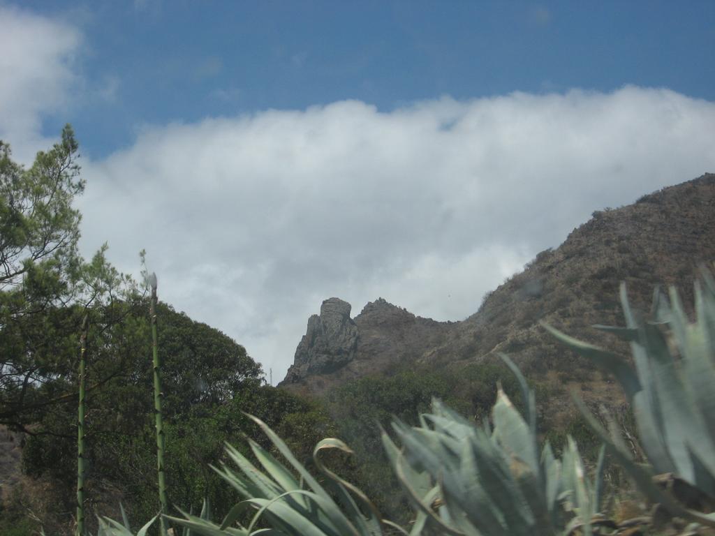 Tenerife Mai 2008 (289).JPG