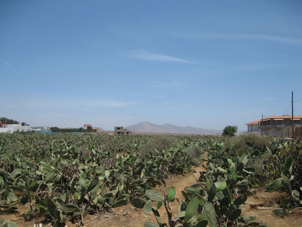 Fuerteventura Mai2009 (74).JPG