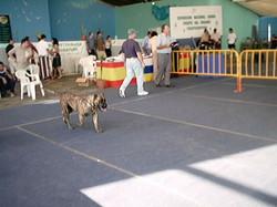 Hundeaustellung Fuerte Oktober 2001 (48)