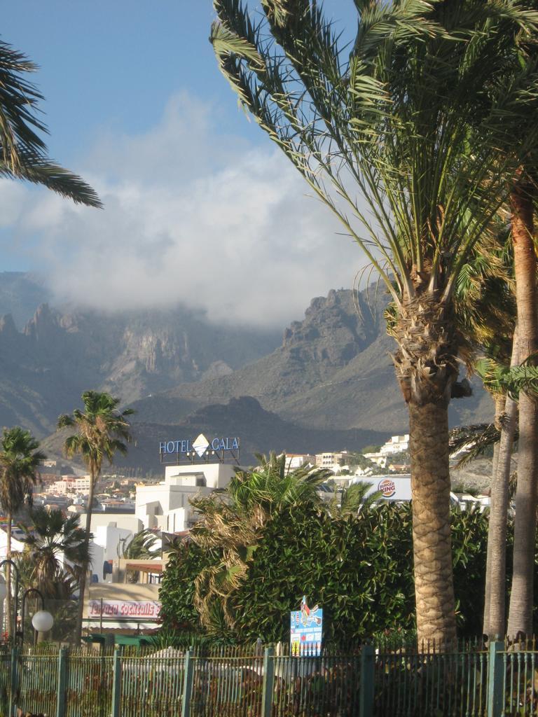 Tenerife Mai 2008 (138).JPG