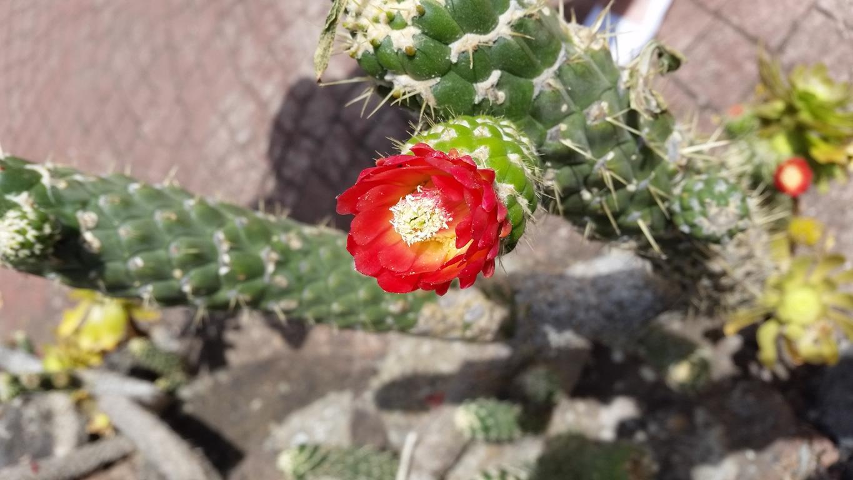 Gran Canaria Mai 2015 (34).JPG