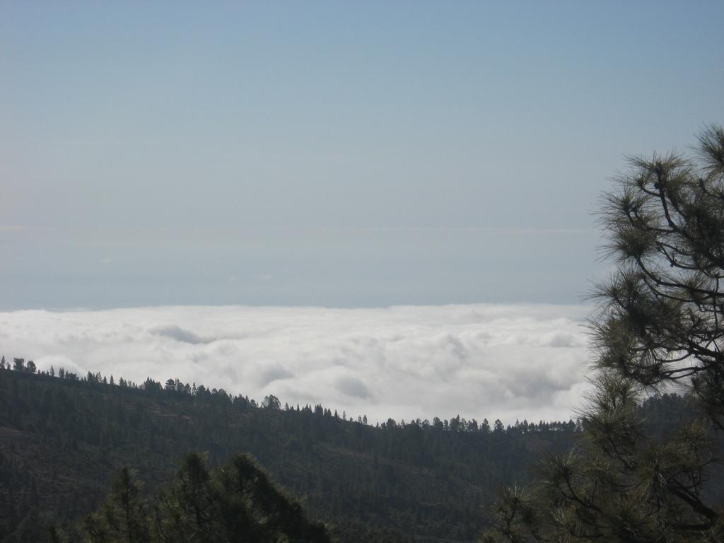 Tenerife Mai 2008 (410).JPG