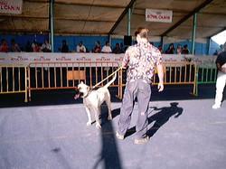 Hundeaustellung Fuerte Oktober 2001 (39)