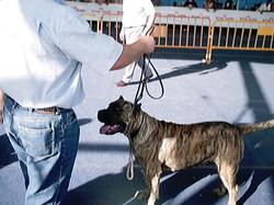 Hundeaustellung Fuerte Oktober 2001 (49)