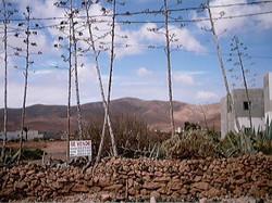 Leben auf Fuerte 2001 (121)